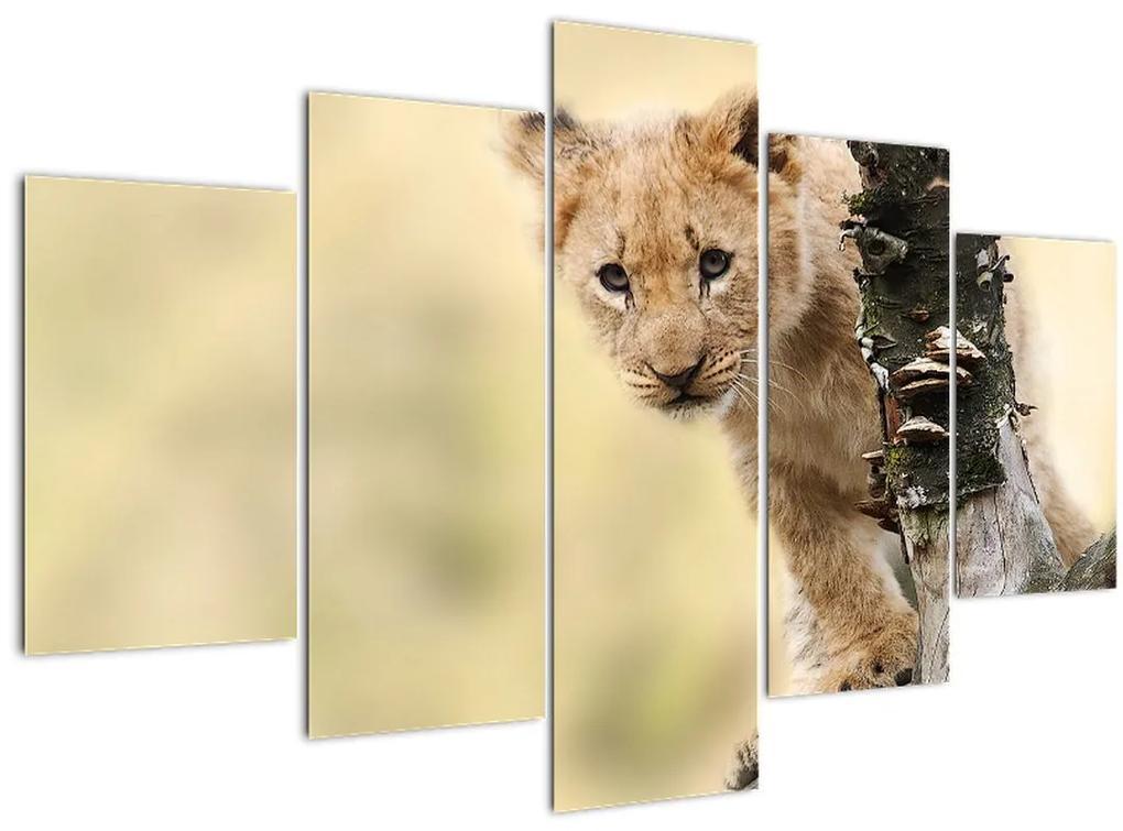 Egy oroszlán kölyök képe (150x105 cm)