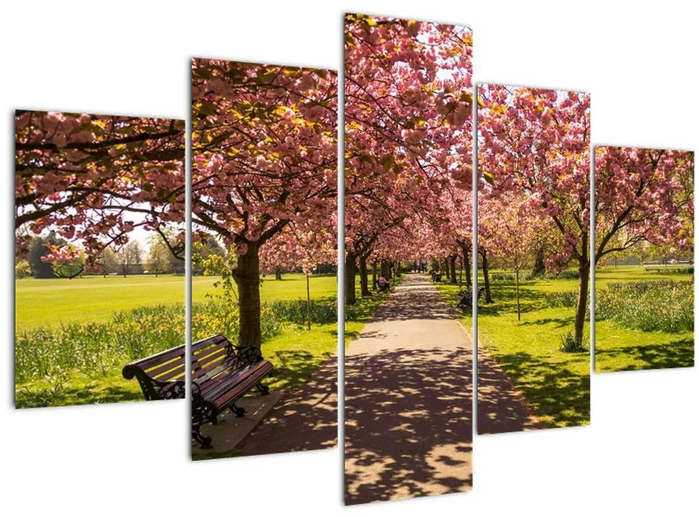 Kép - cseresznye ültetvény (150x105 cm)