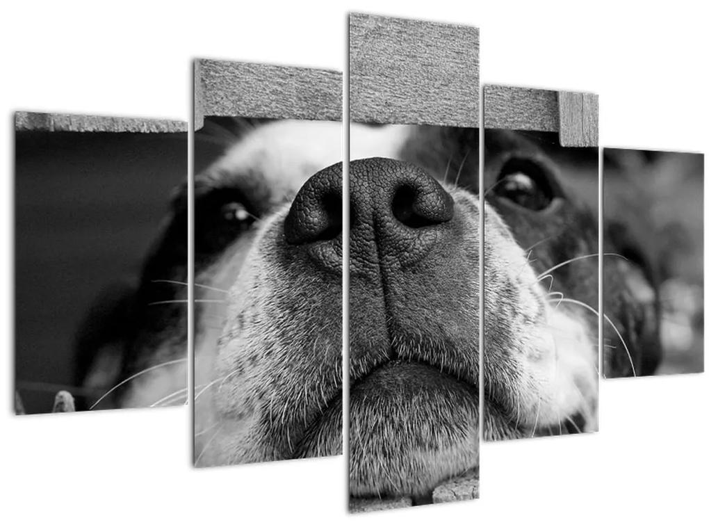 Kutya képe (150x105 cm)