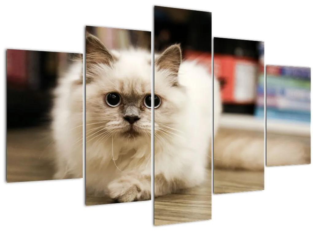 Fehér macska képe (150x105 cm)