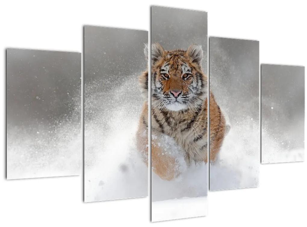 Futó tigris a hóban képe (150x105 cm)