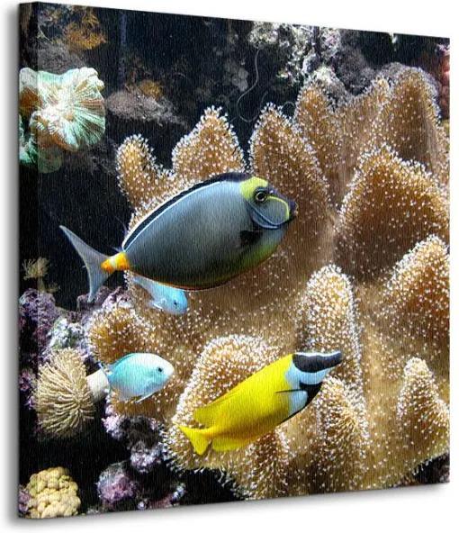 Vászonkép Tengeri halak Ananas 40x40cm CKS0249