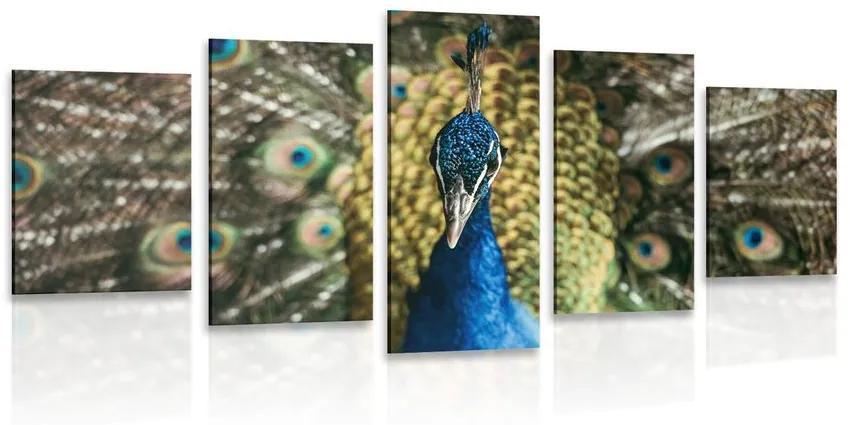 5 részes kép páva szépsége