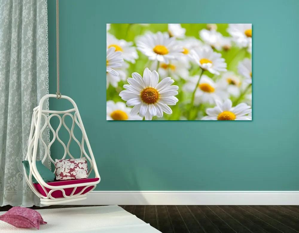 Kép tavaszi virágos rét