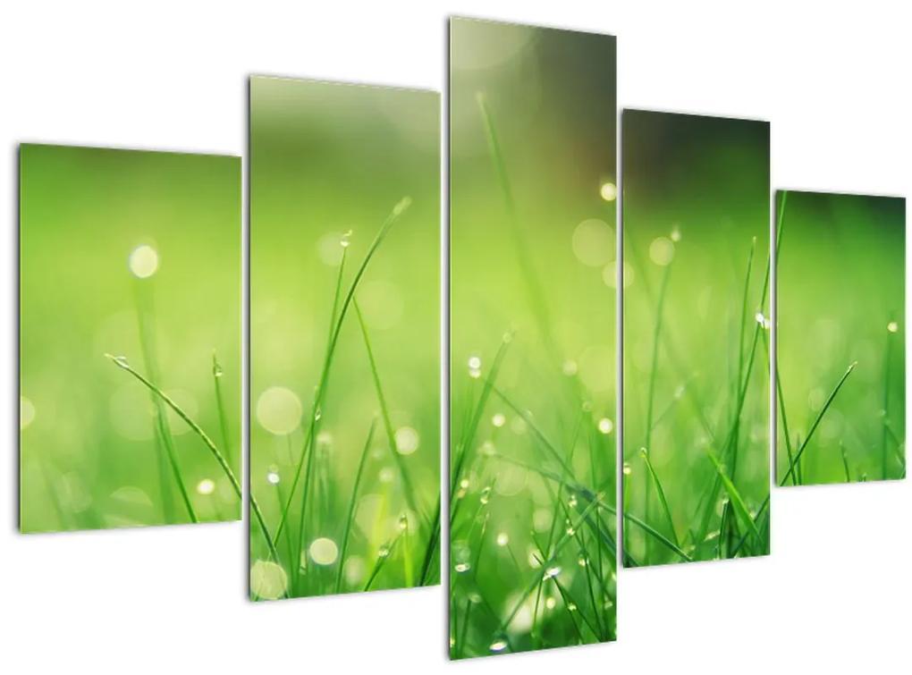 Kép - harmatos fű (150x105 cm)
