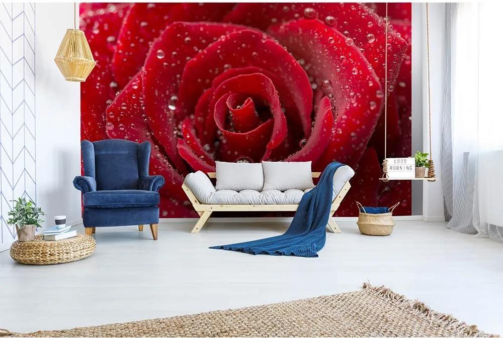 Fotótapéta piros rózsa