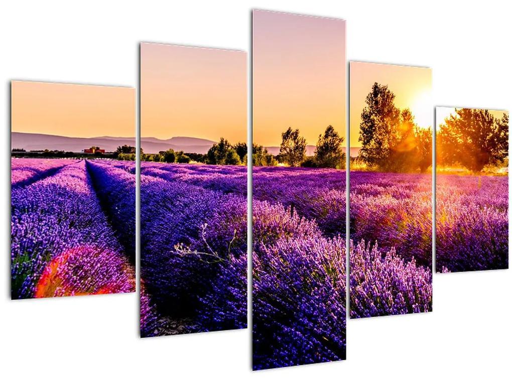 Levandula mező képe (150x105 cm)
