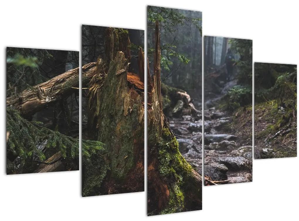 Kép - Az erdőben (150x105 cm)
