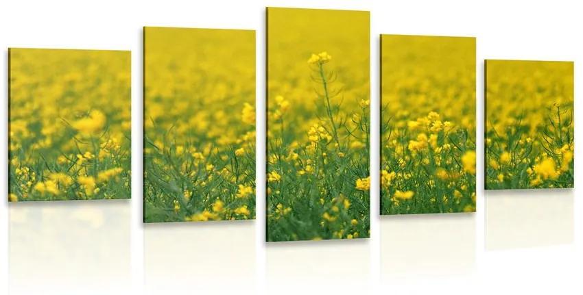 5 részes kép sárga mező