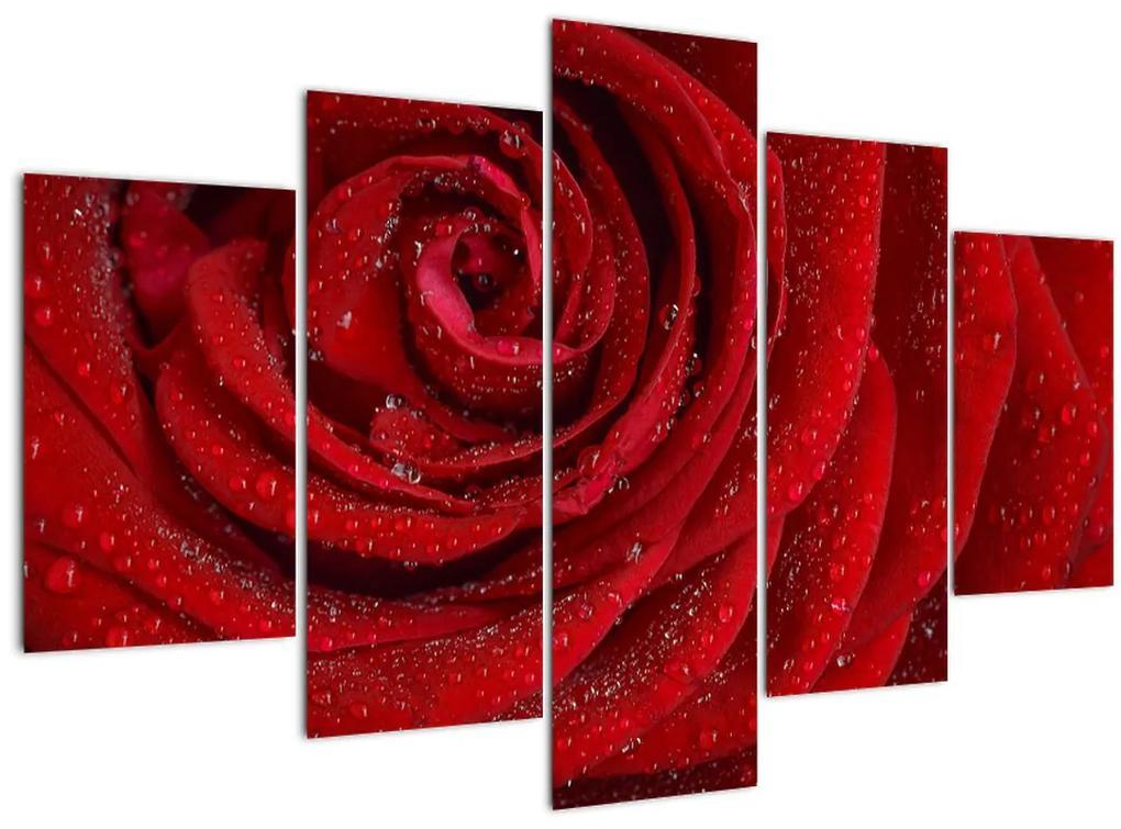 Kép - részlet a rózsáról (150x105 cm)