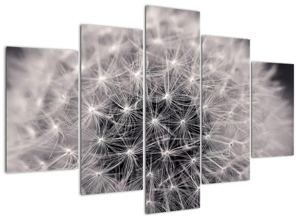 Pitypang képe (150x105 cm)