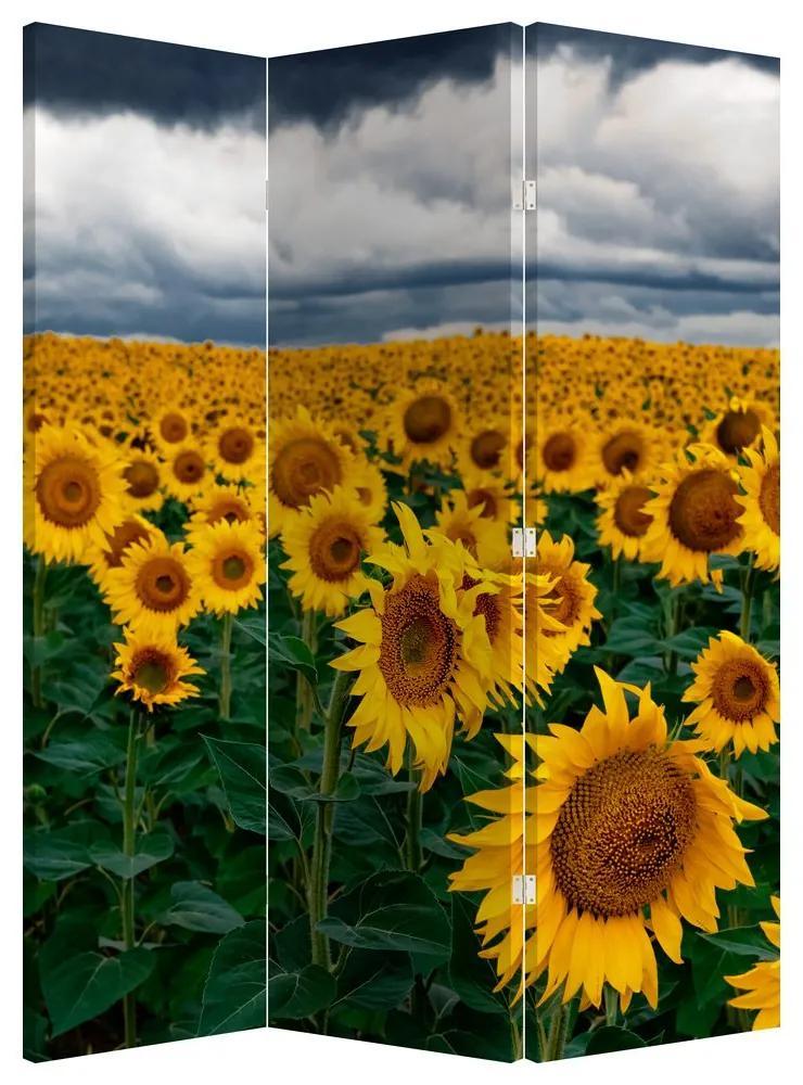 Paraván - Napraforgó mező (135x180 cm)