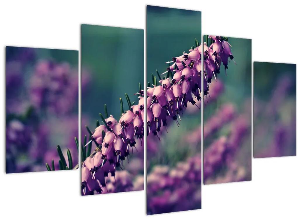 Levandula képe (150x105 cm)