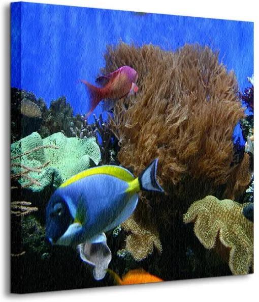 Vászonkép Akváriumi halak Costa Giacomo 40x40cm CKS0416