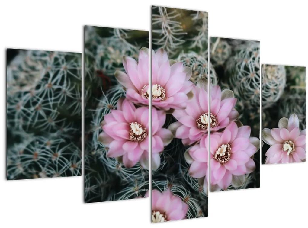 Kaktusz virágának képe (150x105 cm)