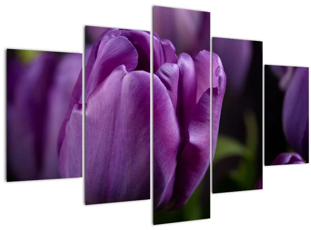 Tulipán vírág képe (150x105 cm)