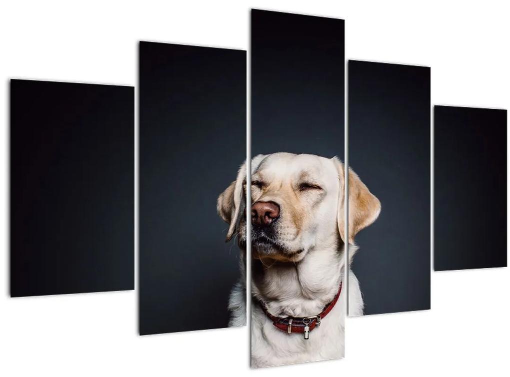 Labrador képe (150x105 cm)