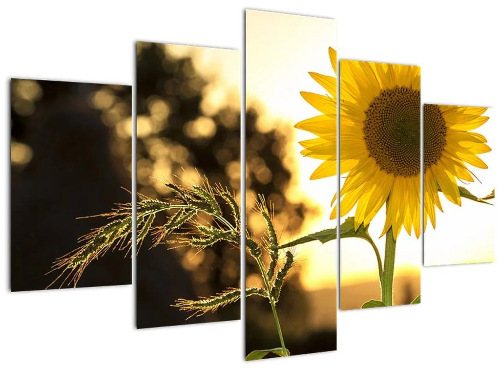 Napraforgó képe (150x105 cm)