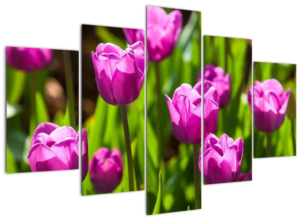 Tulipánok a réten képe (150x105 cm)