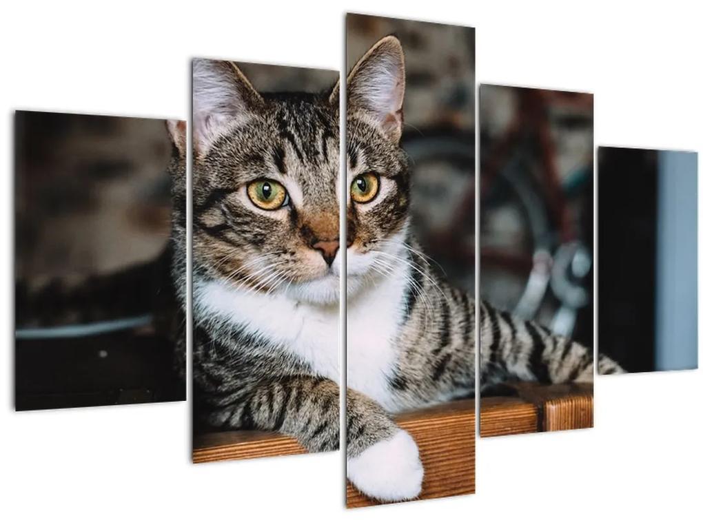 Macska képe (150x105 cm)