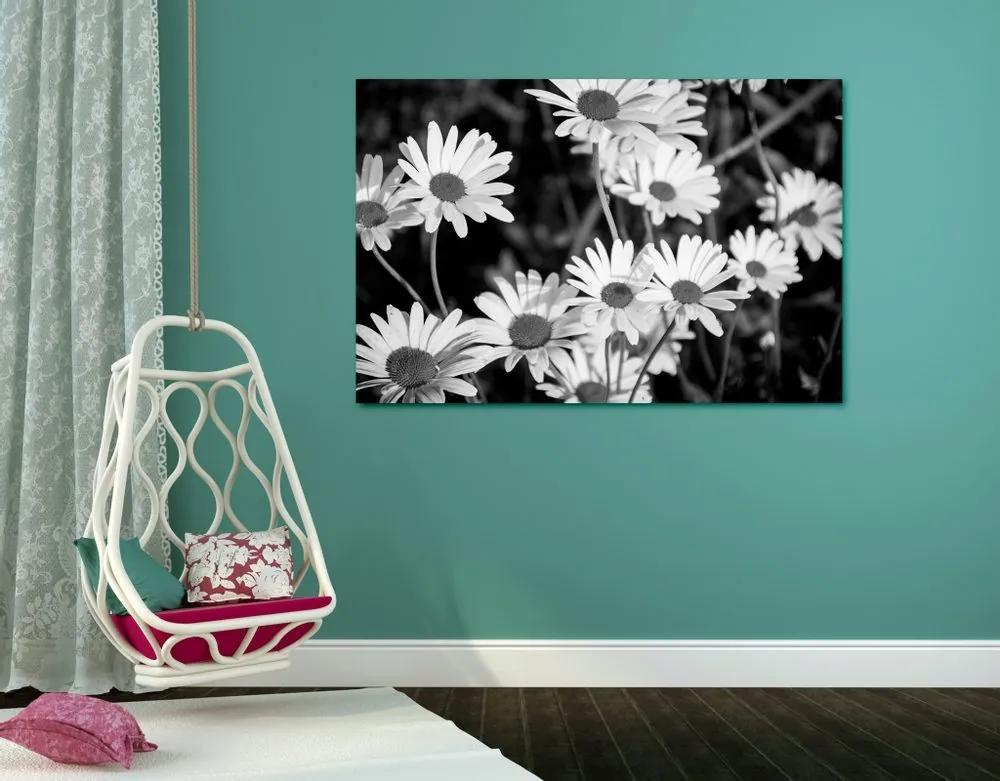 Kép szezszorszép kertben fekete fehérben
