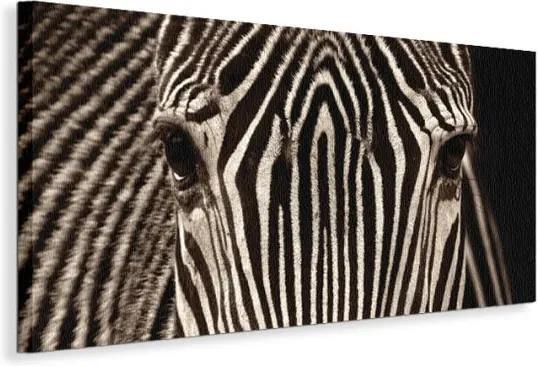 Vászonkép Zebra tekintete Cano Marina 100x50cm WDC40393