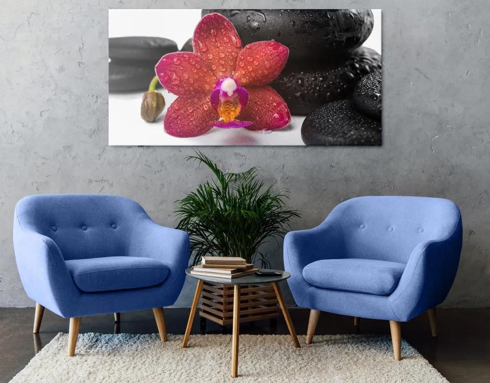 Kép Zen kövek és orchidea fehér háttérrel