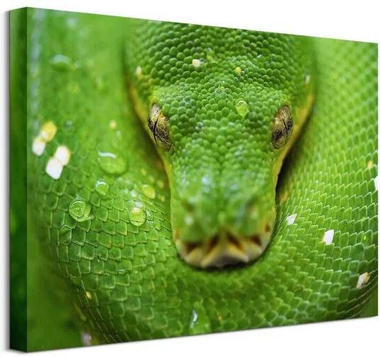 Vászonkép Zöld kígyó Clode David 40x30cm CAA3796