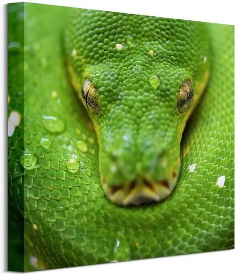 Vászonkép Zöld kígyó Clode David 40x40cm CKS3796
