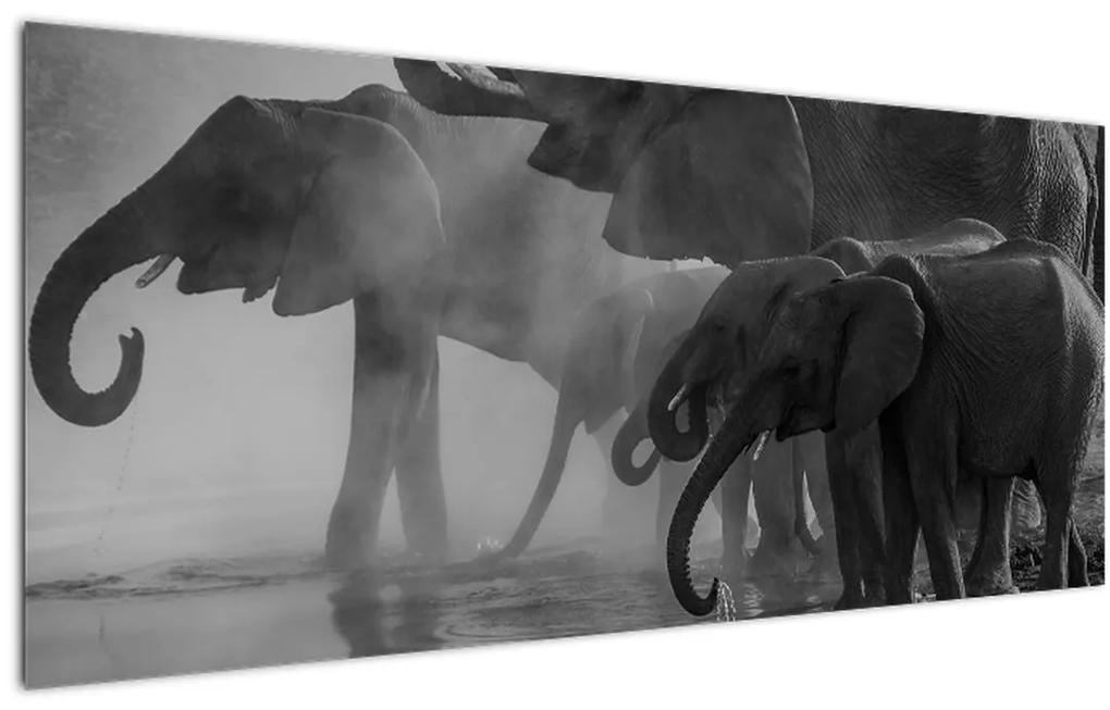 Elefánt képe - fekete fehér (120x50 cm)