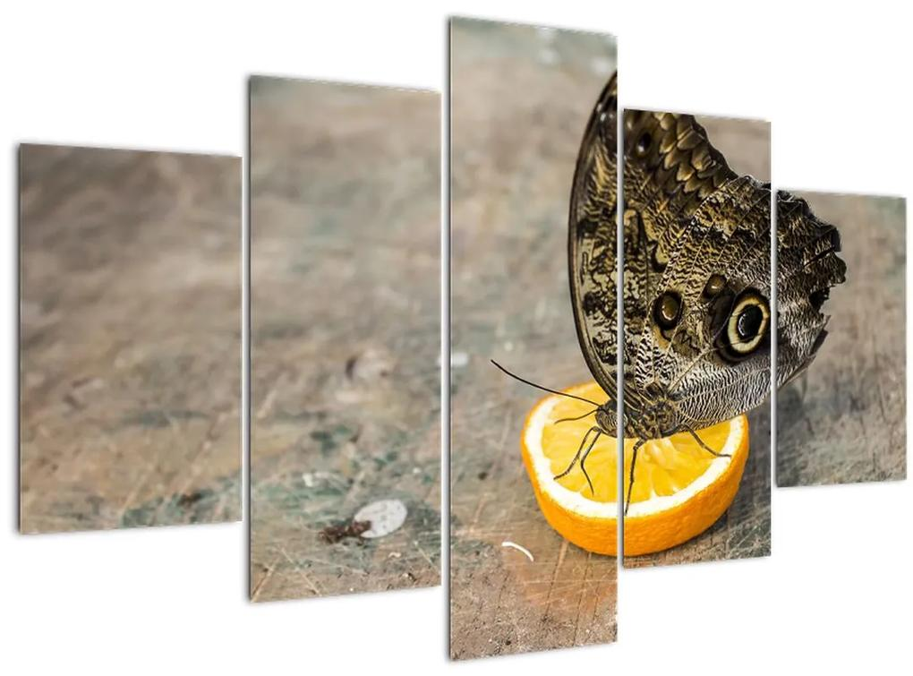 Pillangó képe (150x105 cm)