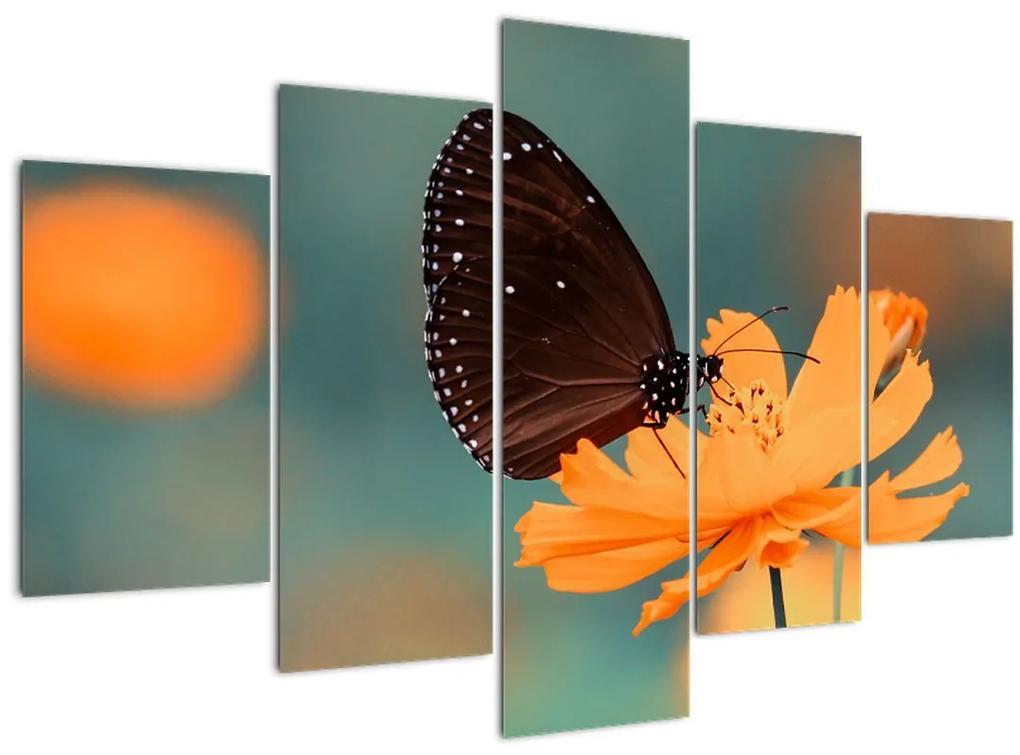 Kép - pillangó narancssárga virágon (150x105 cm)