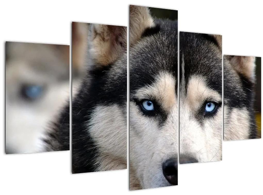 Husky kutya kép (150x105 cm)