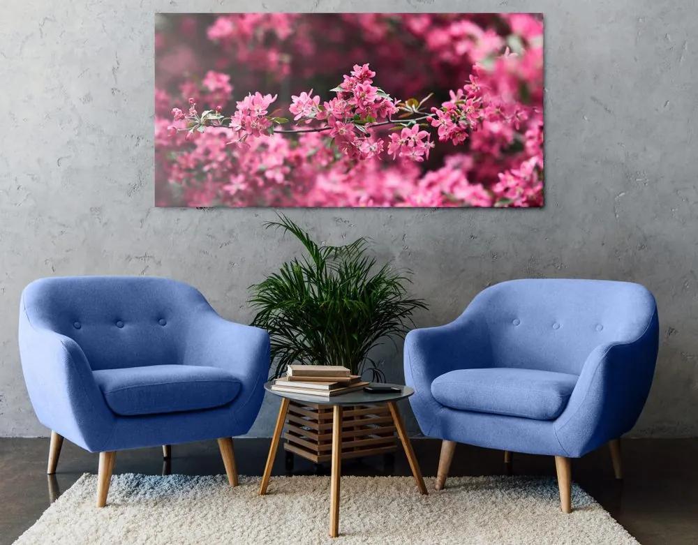 Kép cseresznye virág