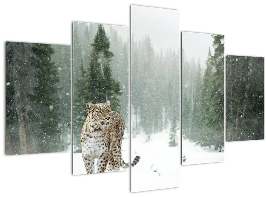 Leopárd a hóban képe (150x105 cm)