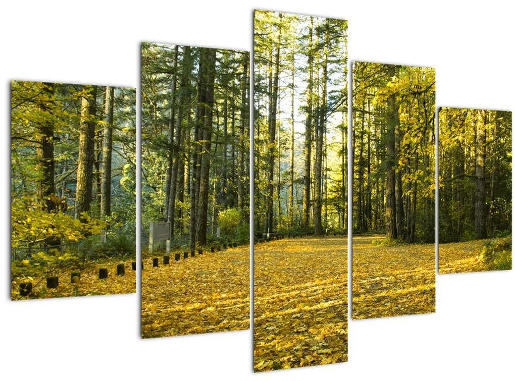 Kép - erdő ősszel (150x105 cm)