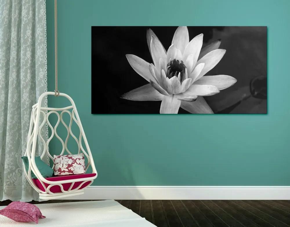 Kép fekete fehér tavirózsa