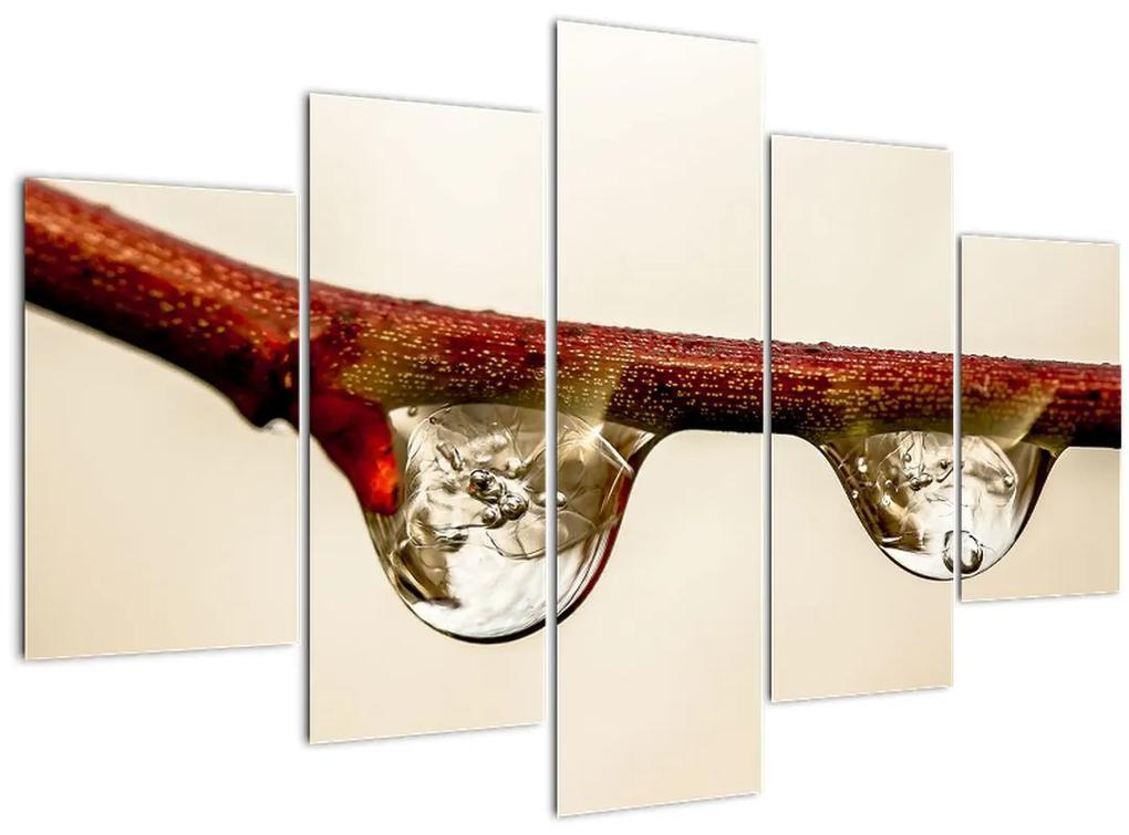Vízcseppek a faágon képe (150x105 cm)