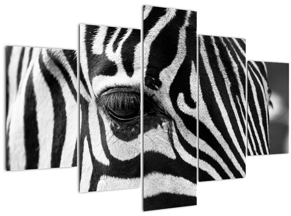Zebra képe (150x105 cm)