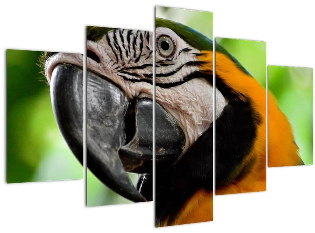 Papagáj képe (150x105 cm)