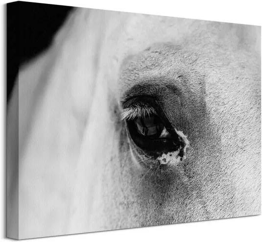 Vászonkép A ló fekete szeme Farrugia Lorene 40x30cm CAA3749