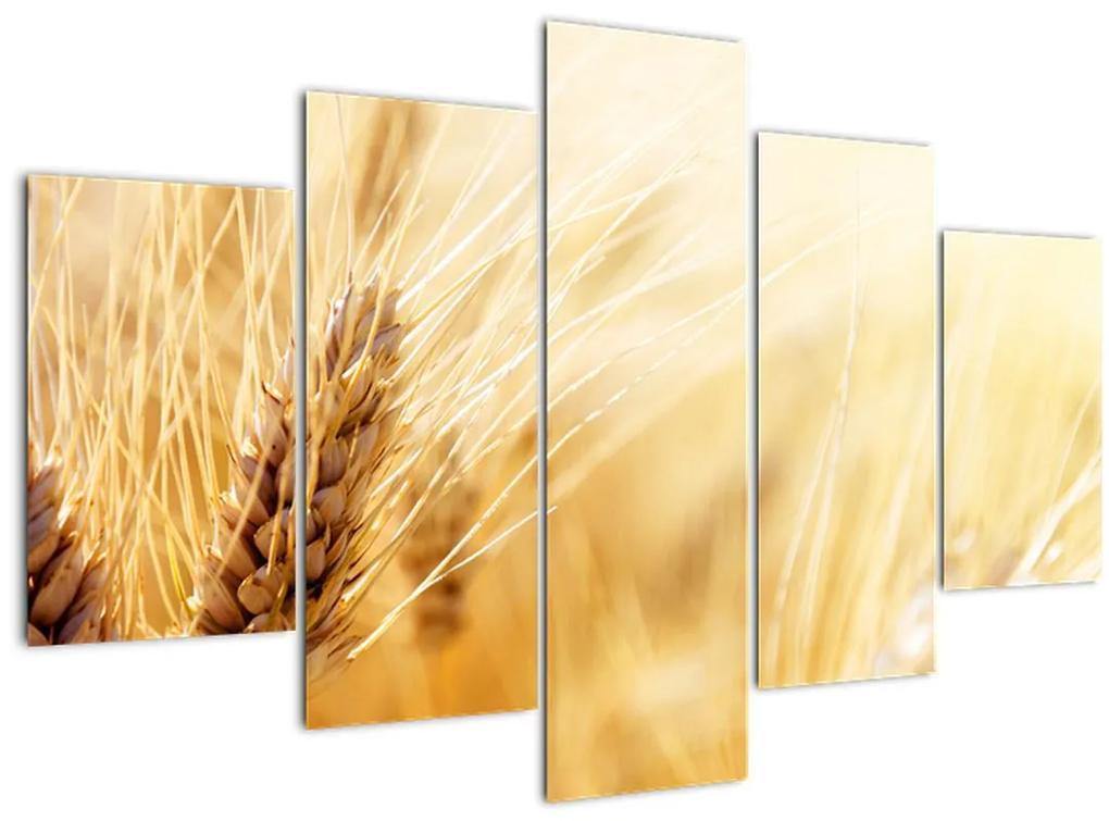 Kép - részlet gabona (150x105 cm)