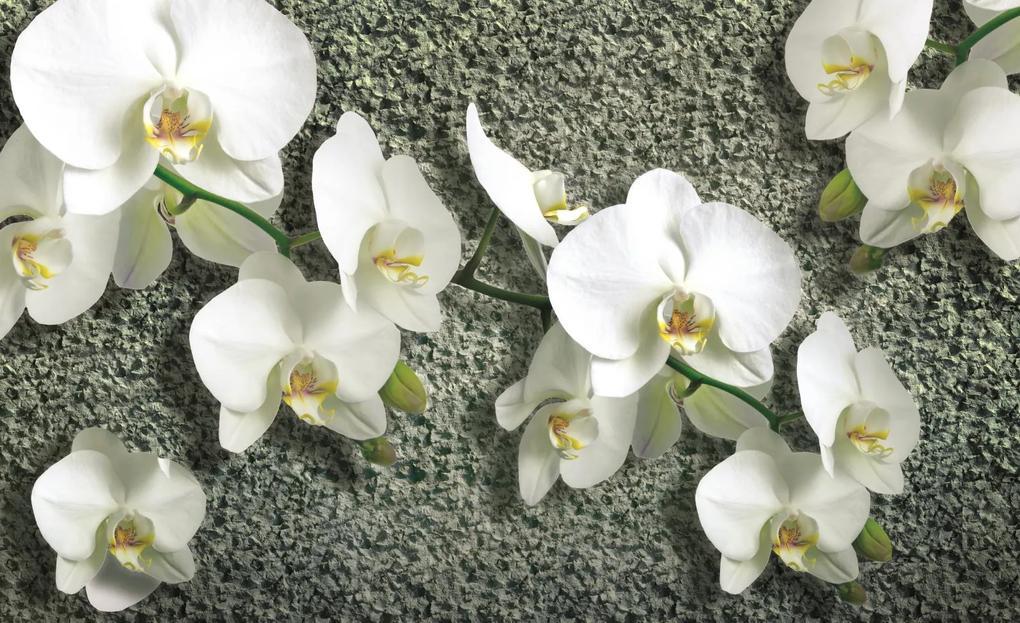 Poszter tapéta Orchid on the structure papír 254 x 184 cm papír 254 x 184 cm
