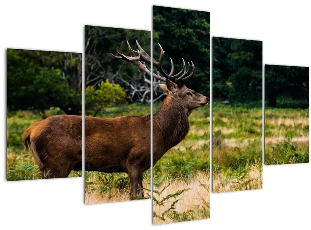 Szarvas képe (150x105 cm)