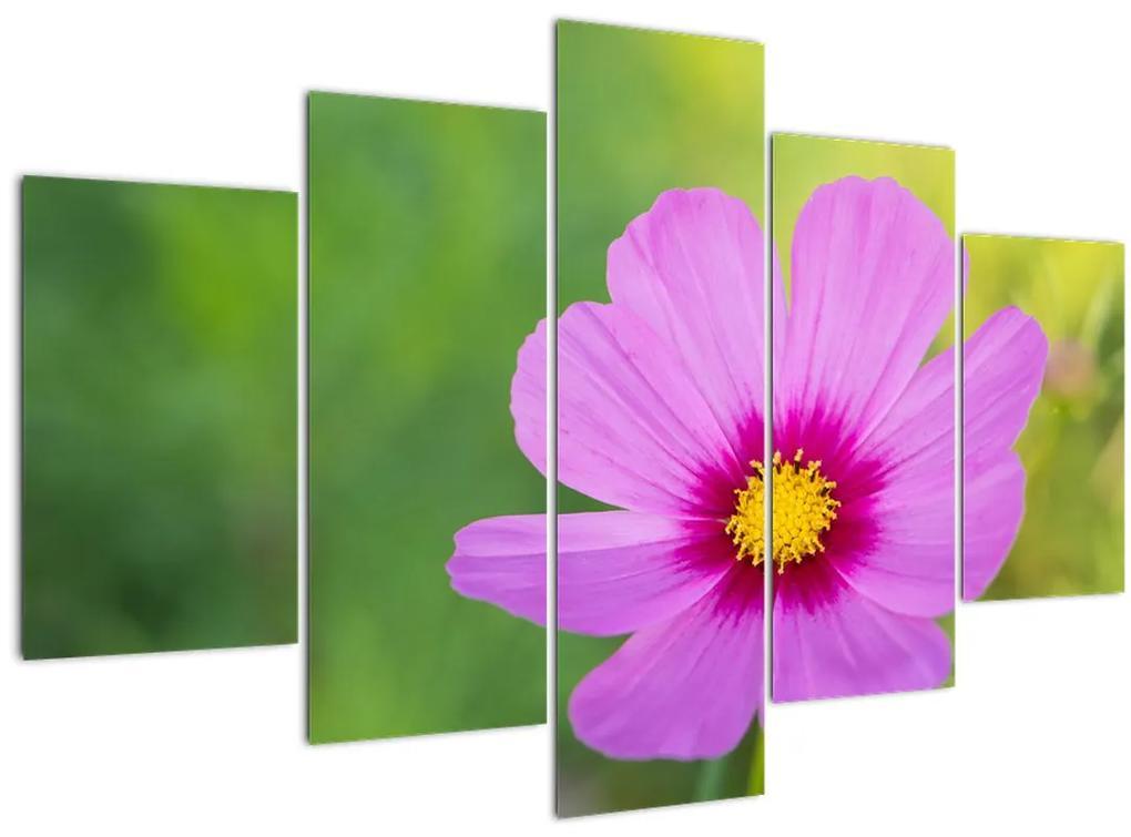 Kép - réti virág (150x105 cm)