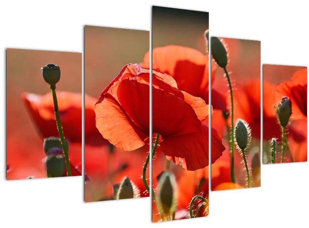 Pipacsok képe (150x105 cm)