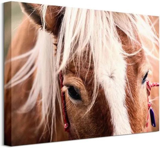Vászonkép Svájci ló Andres Raphael 40x30cm CAA3782