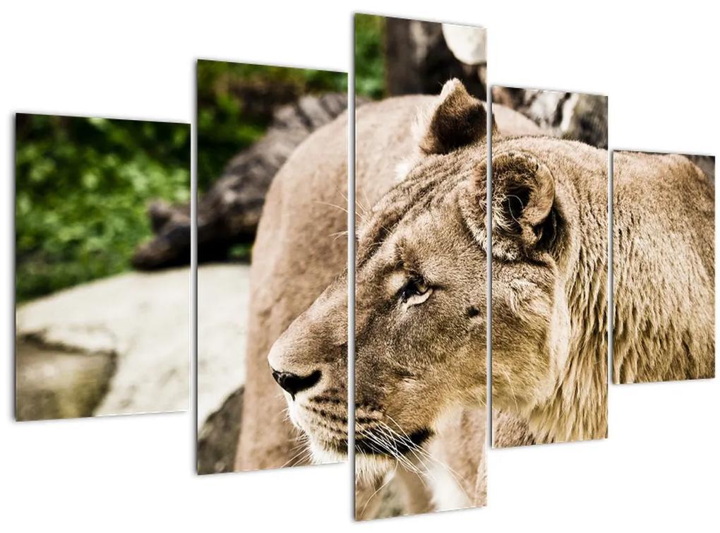 Oroszlán képe (150x105 cm)