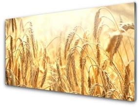 Fali üvegkép Kalászokat mező természetét 125x50 cm