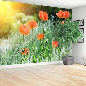 Fotótapéta mák virágok 104x70